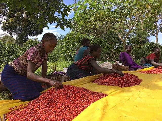 Fairtrade farmari